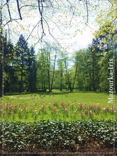 ポーランドワルシャワ観光おすすめ観光ガイドワジェンキ公園