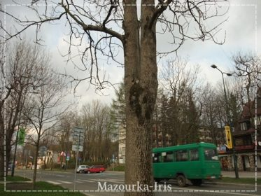 ワルシャワザコパネクラクフ観光行き方お土産チケット値段料金