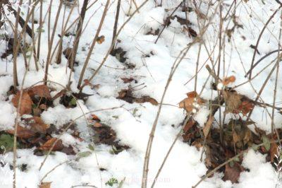 ポーランド旅行ワルシャワ観光ワジェンキ公園ネズミ