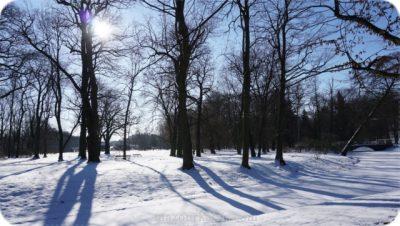 ポーランド観光個人ガイドワジェンキ公園