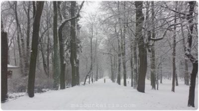 ワルシャワおすすめ観光ガイドワジェンキ公園