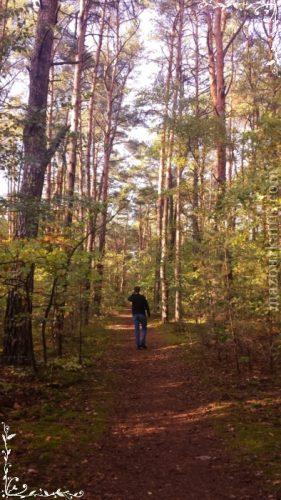 ポーランド日常生活秋のキノコ狩り